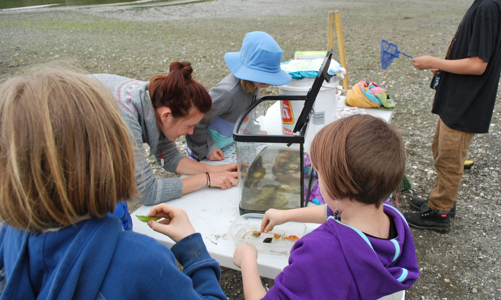 Elementary students observe ocean creatures in an aquarium at the beach.