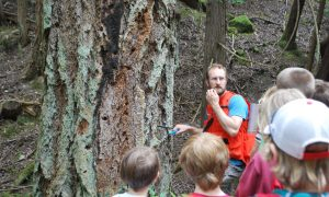 Discussing the science of tree growth and the role of fire.