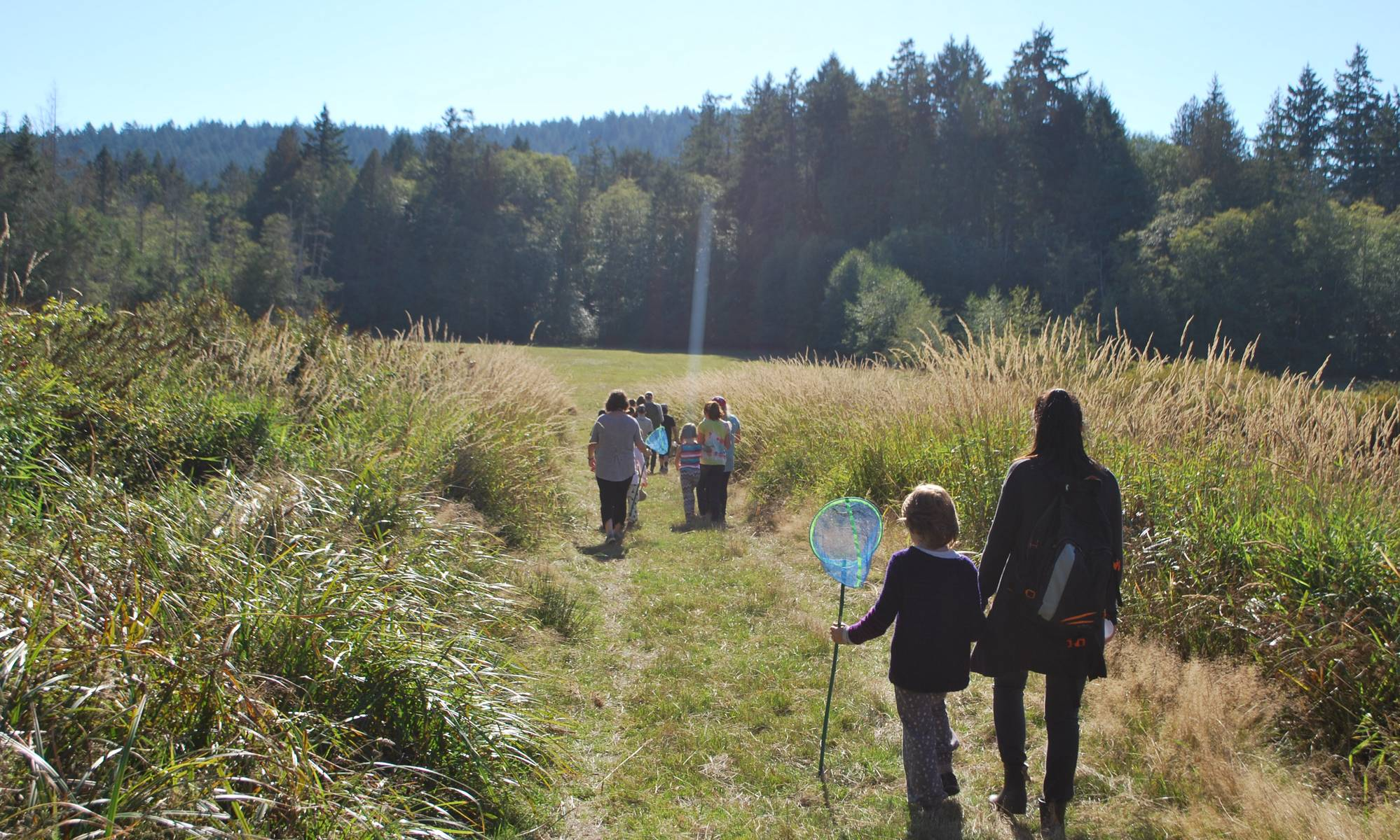 Students walk into a sunny field to catch insects.