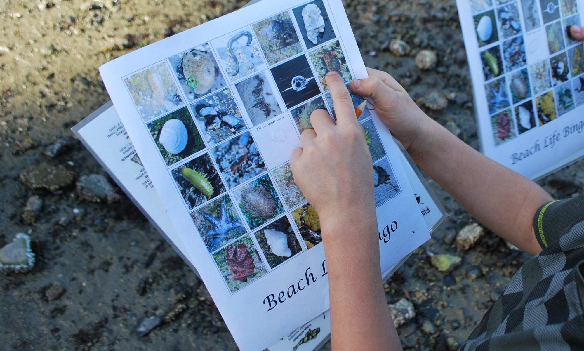 Student points to a picture on a beach bingo card.