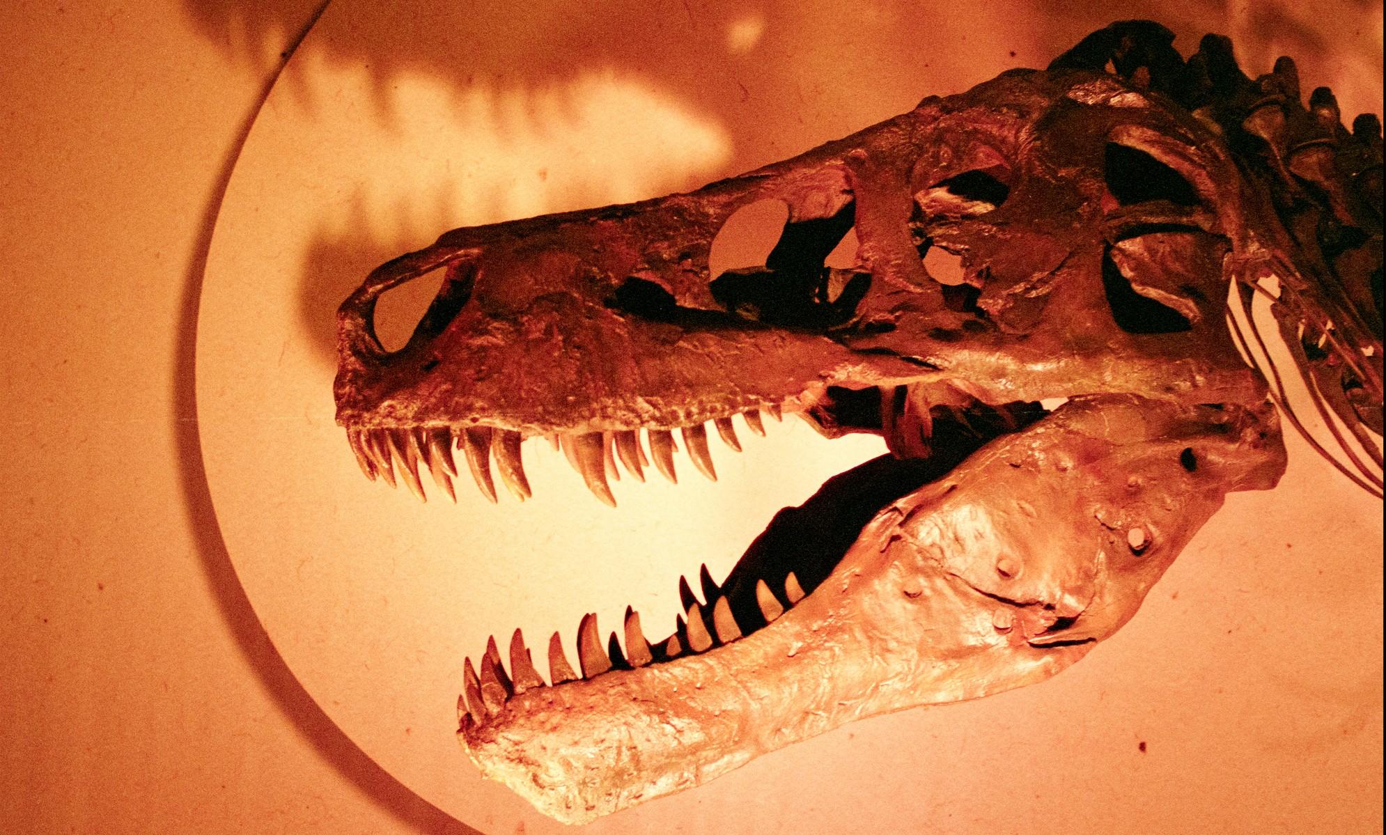 Tyranosaurus rex skeleton