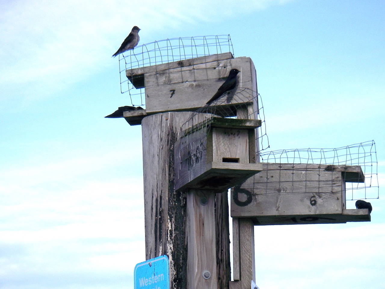 Nestbox cluster in Bennett Bay showing wire predator guards. Photo: B. Rochet