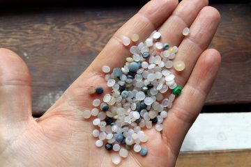 Nurdles that were painstakingly separated from bark bits, tree needles, and sand on Piggott Bay Beach