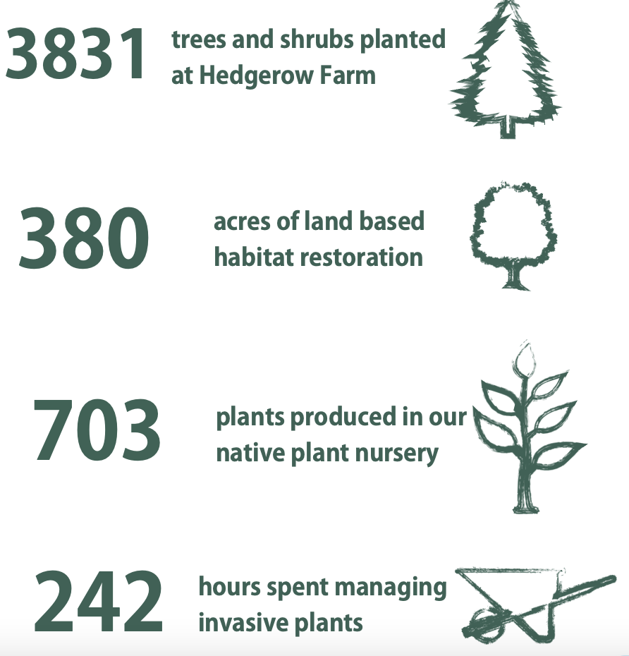 3831 trees and shrubs planted at Hedgerow Farm, 389 acres of land based habitat restoration, 703 plants produced in our native plant nursery, 242 hours spent managing invasive plants