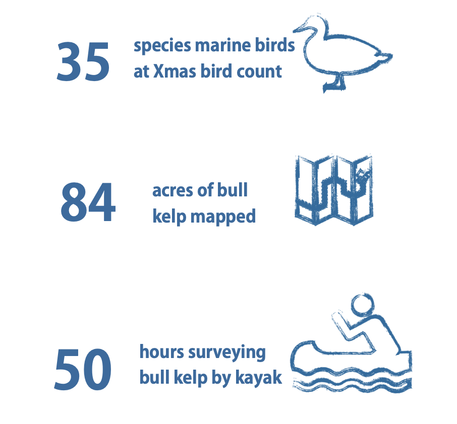 35 species marine birds at Christmas bird count, 84 acres of bull kelp mapped, 50 hours surveying bull kelp by kayak
