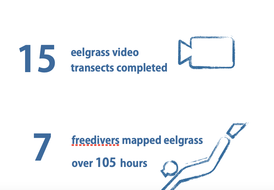 15 eelgrasss video transects completed, 7 free divers mapped eelgrass over 105 hours