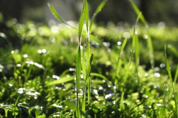 grass and moss with water drops